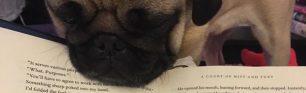 cropped-cubert-book2.jpg